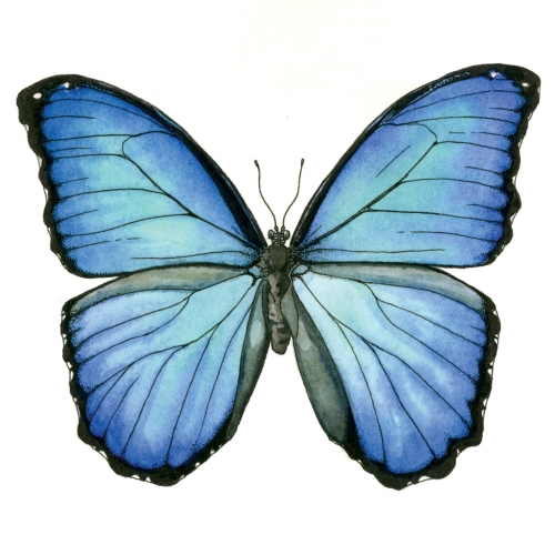 oialla_butterfly_watercolor