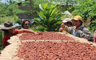 The women of Baures dry the beautiful wild cocoa beans